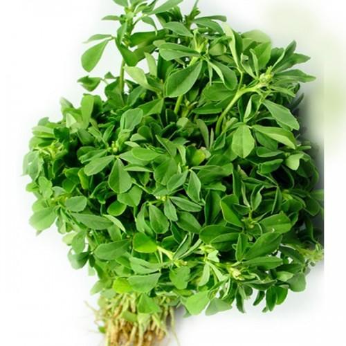 Methi Fenugreek Leaves