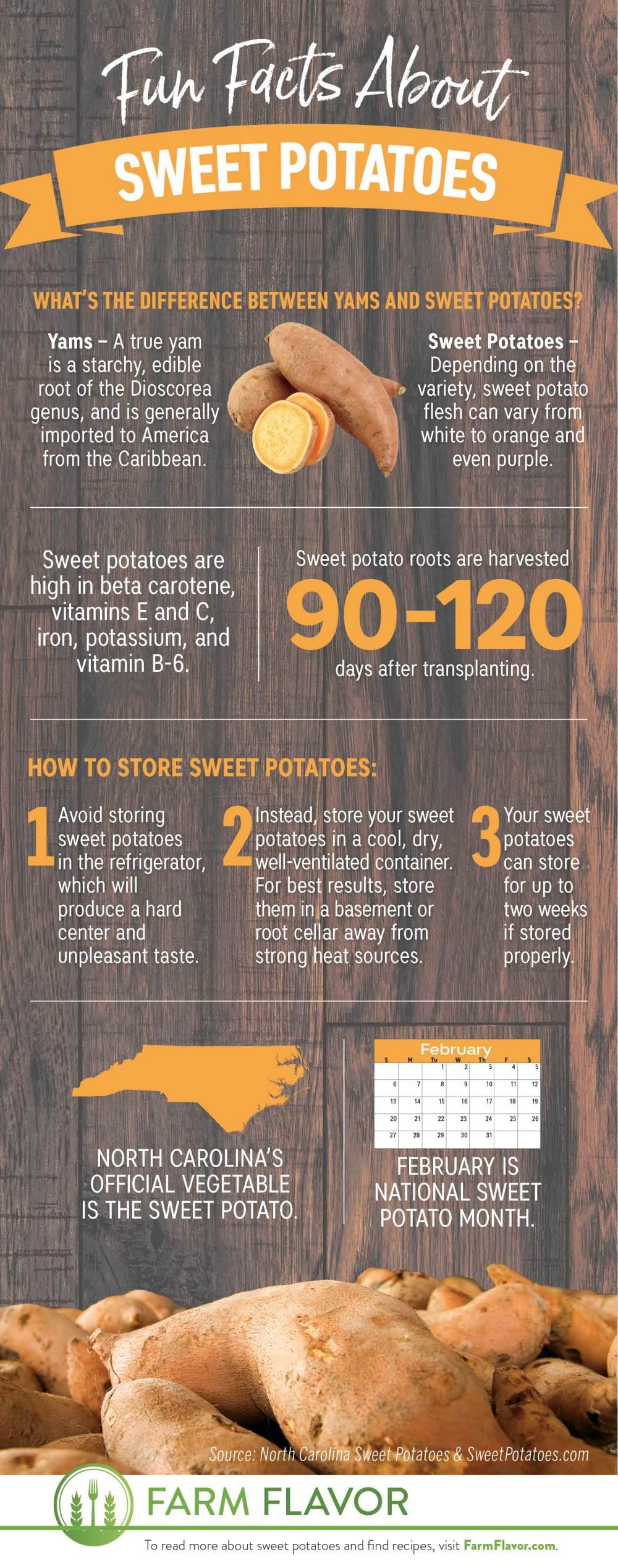 Sweet Potato fun facts infographic
